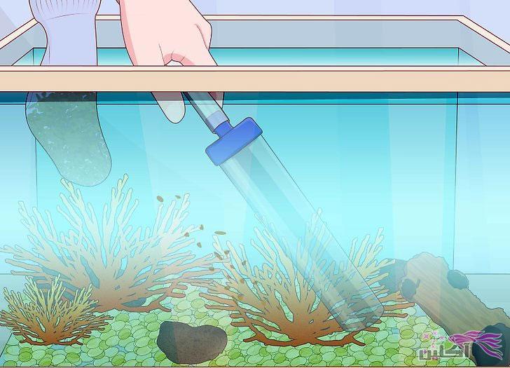چگونه یک مخزن ماهی را پاک کنید